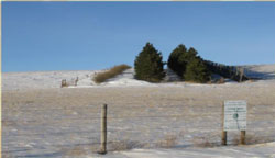 living-snow-fence-2